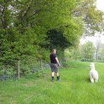 A man walking an alpaca through the Little Orchard Alpacas field
