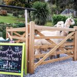 Two alpacas standing in a pen at a wedding ceremony. A blackboard with the names of the bride, groom and the alpacas stands in front of the pen