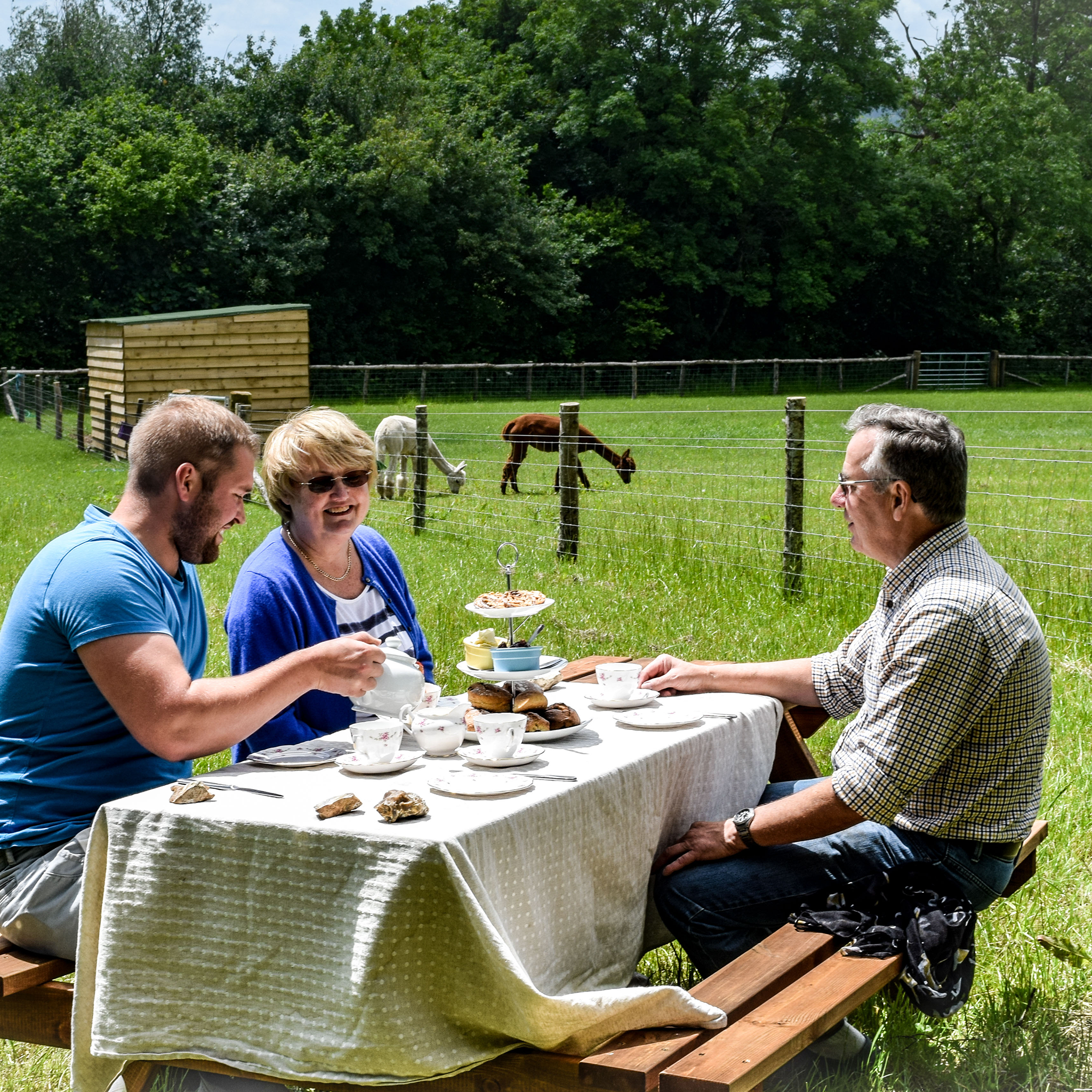 Three people sitting outdoors enjoying a homemade Devonshire cream tea whilst overlooking the alpaca paddocks.