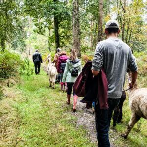 Alpaca Woodland Trek (September - April)