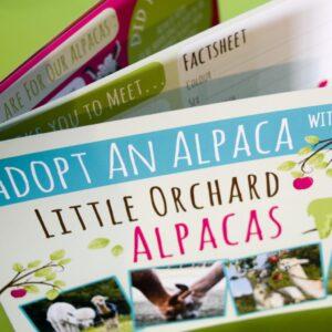 Adopt an Alpaca